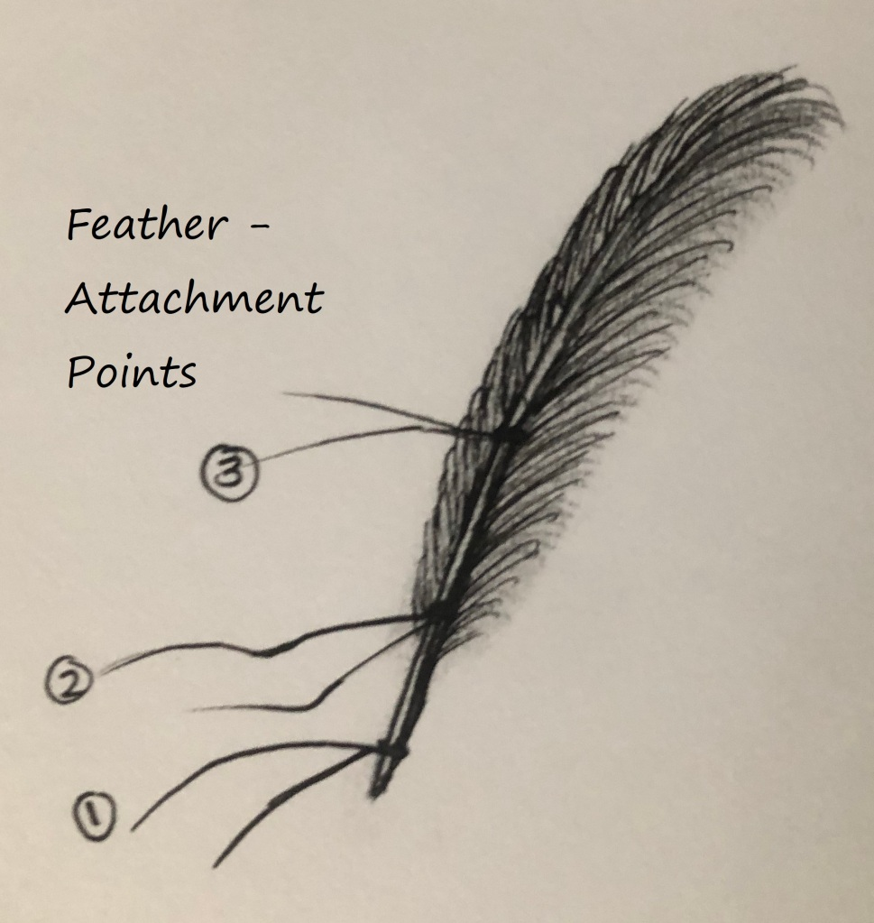 Feather attachment points 1-3.