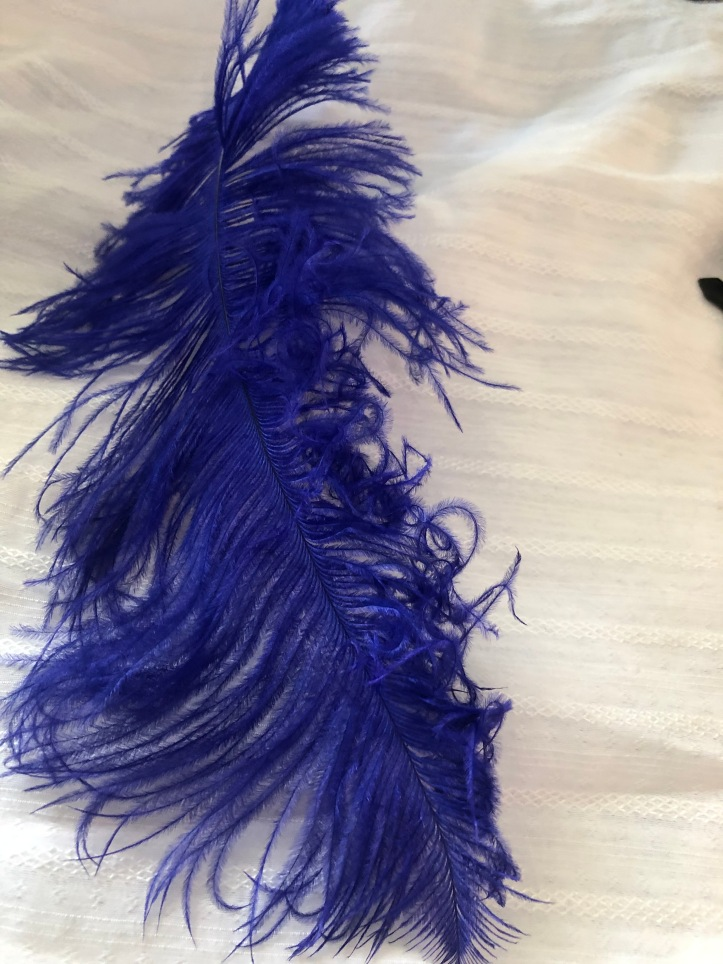 Curling the barbs of a drab ostrich feather.
