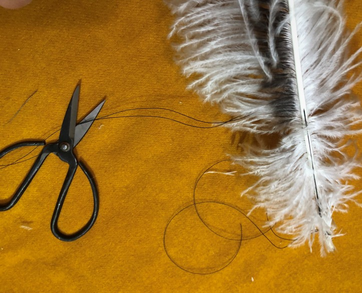 Second attachment point on chinchilla ostrich wing plum.